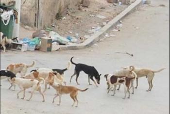 شكوى من انتشار الكلاب الضالة في كفر الشوافين بأولاد صقر