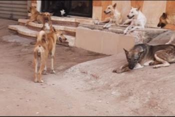 كلاب ضالة تهدد سكان