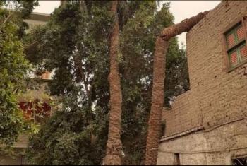 طولها 14 متر.. نخلة آيلة للسقوط تهدد حياة سكان كفر الحمام بالزقازيق