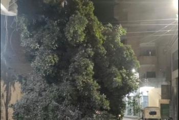 تهدد حياة المارة.. سقوط شجرة على أسلاك الكهرباء بأبوكبير